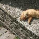 Kuva: Uni ratkaisee kaikki ongelmamme