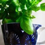 Näin kasvatat luomulaatuisia yrttejä kotona