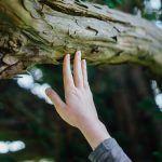 Puut ovat ihmistä viisaampia