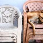 Sielunsäteitä: Ego on ihan hyvä koira mutta tosi huono isäntä