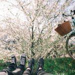 Väsymys kertoo siitä, että on nyt on virkistävän kevätsiivouksen aika – Vihreä hoitaa mieltä ja puhdistaa kehoa