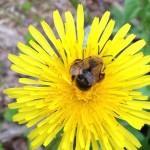 Rosala: Keltainen toukokuu