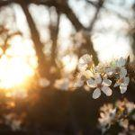 Meditaatio muuttaa tylsyyden pyhyydeksi