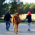 Sielun soppa: Hevoset valmentajina – muutoksia parempaan nyt
