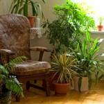 Anopinkieli onkin happitehdas – 3 tuttua viherkasvia, jotka raikastavat sisäilmaa tehokkaasti