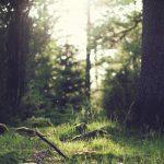 Tutkimusten mukaan yhteys luontoon on elintärkeää terveydelle: Oleskelu luonnossa parantaa itsetuntoa ja vähentää vihaa