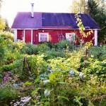 Mitä tulisi huomioida syyskesän puutarhassa?