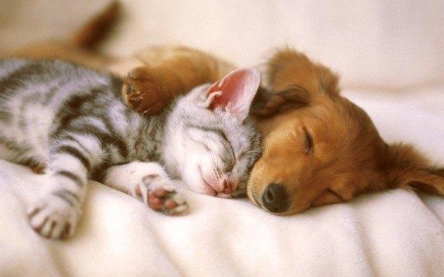 halaavat kissa ja koira (640x400)