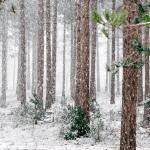 Anna talvisen luonnon rauhoittaa sinut