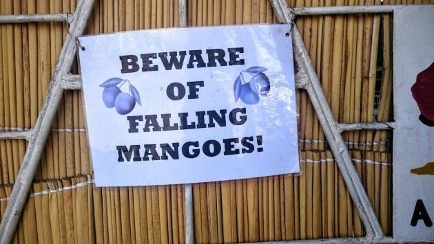 """""""Varo putoavia mangoja"""" – välipalan saattoi napata kadulla suoraan puusta."""