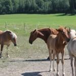 Minun myötätuntoni oli ehdollistunutta, hevosen ei