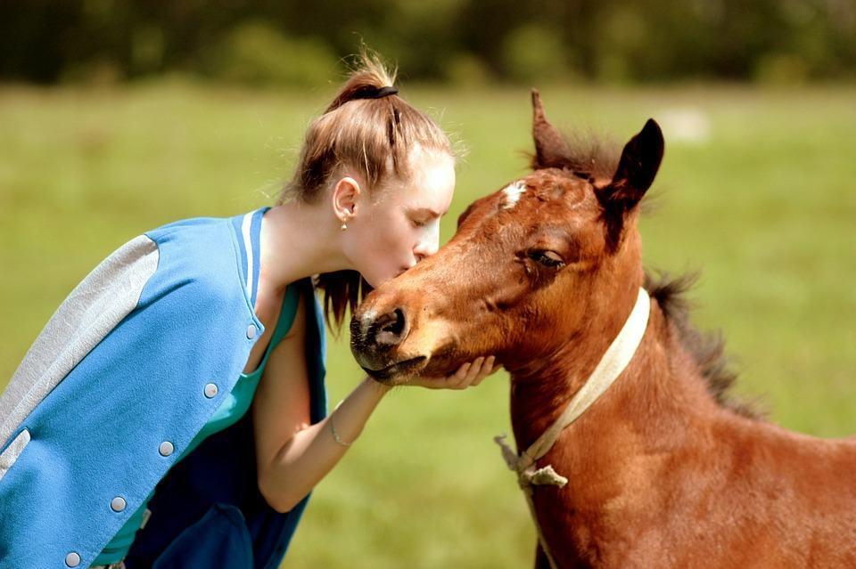 Merkityksellisyys horse kiss
