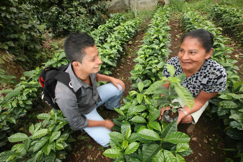 Tekninen avustaja Carlos Enrique Ramírez Díaz ja Reilun kaupan kahvinviljelijä Carmeline Carranza Diaz keskustelevat taimitarhassa kahvipensaiden taimien äärellä Guatemalassa. Kuva: Sean Hawkey.