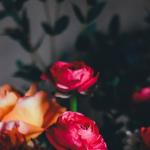 Henkistä vahvuutta vai kovaa ulkokuorta? – 7 merkkiä helpottamaan tunnistusta