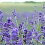 Näin teet ihanan kasvovoiteen villiyrteistä ja puutarhan kukista