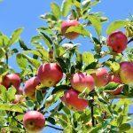 Tee itse yllättävä omenahillo – tätä herkkua kannattaa kokeilla!