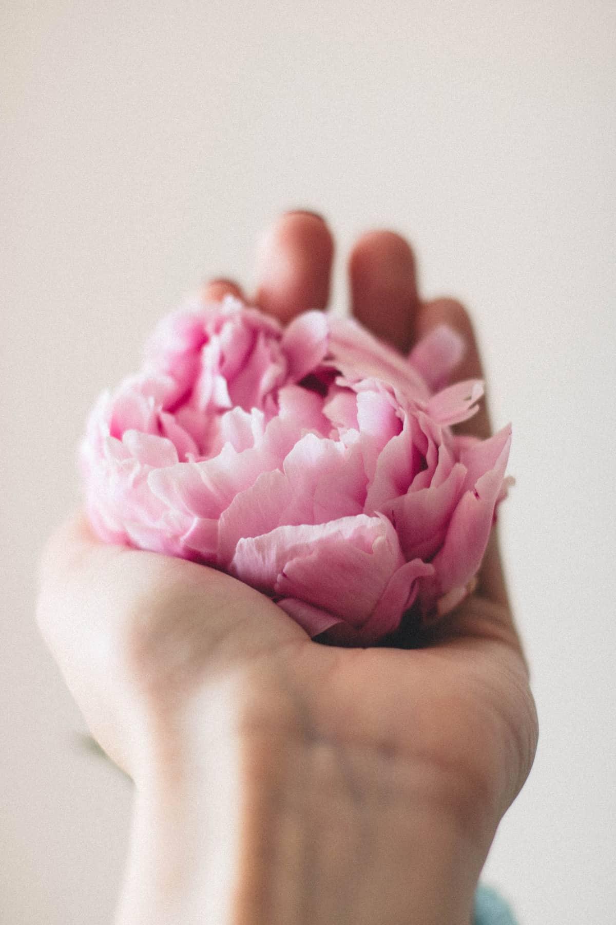 kukkakammenella