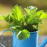 Nokkos-pellavapatonki maistuu vihreälle kesälle – poimi resepti!