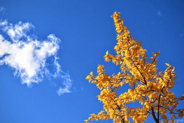 pyha-hetki-sininen-taivas-640