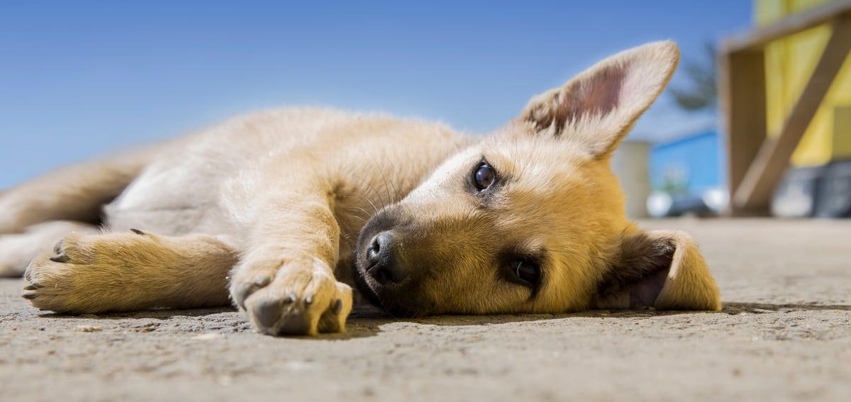 7 henkistä oppituntia koirilta