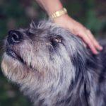 7 hyvän elämän oppituntia koirilta – Älä ota asioita niin vakavasti