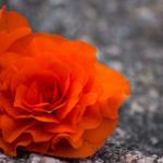 Aidolla rakkaudella ei ole agendaa – Rakkautta on olla hyvä, hyväksytty ja riittävä