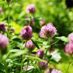 Maata palvellen monivuotisilla kasveilla