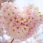 Kuvituskuva kukat Unsplash