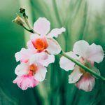 8 vinkkiä erityisherkän hyvinvointiin – Jos haluaa voida hyvin, on opittava hyväksymään itsensä