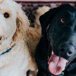 Lohtua lemmikistä luopumisen hetkeen: eläimelle tärkeää on ainoastaan se, miltä elämä tuntuu juuri nyt