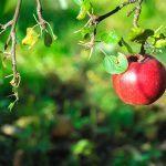 Elinvoimainen vatsa – toimivat työkalut vatsan hyvinvointiin