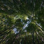 Tutkimuksissa on todistettu metsäkylvyn laskevan verenpainetta, alentavan stressihormoneja ja nostavan mielialaa