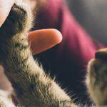 Elämänohjeita, joita kissat ovat minulle opettaneet