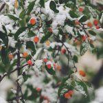 Ensimmäinen joulu eron jälkeen on kipua, mutta myös portti uuteen elämään