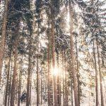 3 tapaa nauttia metsän virkistävästä voimasta – Sukella ihanaan valkeuteen yksin tai ystävän kanssa