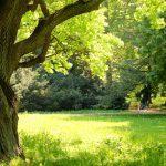 3 tapaa ankkuroitua itseensä – jos et ole kotonasi sinussa, olet jatkuvasti maailman armoilla