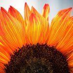 Kiitollisuuden tunne ei tule käskemällä – 3 oivallusta kiitollisuuden lisäämiseen