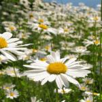 Hanki keveä kesämieli – Näin pääset eroon mieltäsi painavasta pitäisi-listasta