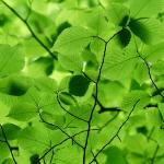 12 parantavaa rohtokasvia, jotka löytyvät Suomen luonnosta