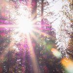 4 tapaa tehdä metsästä oma voimapaikkasi – Mitä ikinä kaipaatkaan metsältä, ole nöyrä