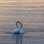 Rakkaus on paljon muutakin kuin ihana tunne – Se on itsen, toisen ja maailman kohtaamista
