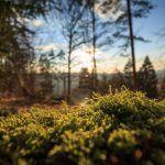 Metsä ja sauna ovat suomalaisen mielialalääkkeitä: Kun ahdistaa, painu metsään tai löylyihin