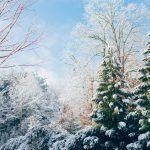 Talvinen metsä karkottaa huolet ja rauhoittaa levottoman mielen