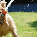 9 ihanaa koirakuvaa, jotka kuvastavat ihmisten ja koirien persoonallisuustyyppejä – Mikä näistä sinä olet?