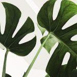 5 syytä, miksi viherkasveja pitäisi olla myös työpaikalla