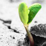 Kevätauringon säteissä kimaltelee toivo – Ei anneta pelon voittaa!