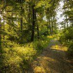 Suomalainen metsä on täynnä villejä herkkuja – Kerää nyt talteen nämä alkukesän voimakasvit