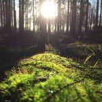 Nautitaan metsän tunnelmasta kaikilla aisteilla – Anna kiristysten ja puristusten haihtua raittiiseen ilmaan