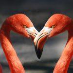 Rakkautta on vaikea löytää, jos vain juttelemme niitä näitä ja väistämme aitoa kohtaamista