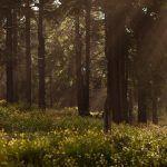 Jätä murheesi metsään – Puhu puille ja anna kallion kannatella